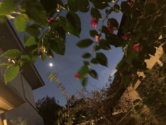 もう今夜は満月です。